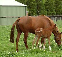 Foal Whisperer by George Petrovsky