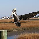 Perfect Landing by Paulette1021