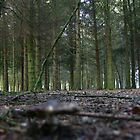 Forest Floor by Sam Denning