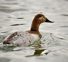 A Female Canvasback Duck  by Saija  Lehtonen