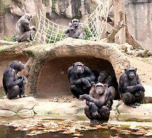 Family of chimpanzees by Honeyboy Martin