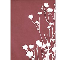 Buttercups in Pink & White Photographic Print