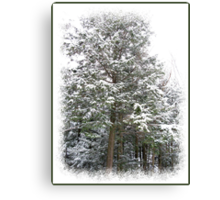 Frosty Snow Covered Pine Trees in a Scenic Wintry Forestscape after a Winter Storm in Quebec Canvas Print