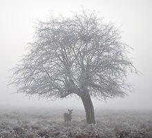 Winter Dawn by Kasia Nowak