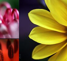 Flower palet by oddoutlet