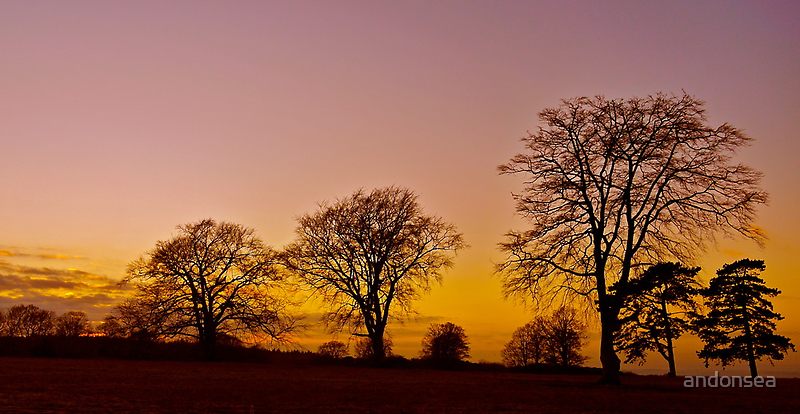 Bare Trees by andonsea