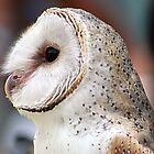 Barn Owl by Brndimage