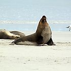 Sea Lion by Brndimage