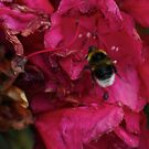 Bee with Pink Flower by Sojourner92