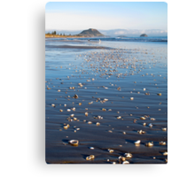 shells on beach Canvas Print