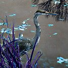 Blue Heron against Purple grass by Jane Neill-Hancock