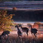 Sika Deer by Jason Pang, FAPS FADPA