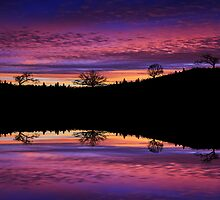 Sunset Reflection by Rookwood Studio ©