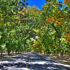 An Autumn Day in the Pecan Orchard by Ray Chiarello
