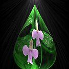 Dewdrop by Carisma