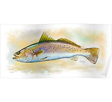 Speckled Trout, Spotted Trout Illustration Poster