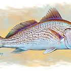 Redfish Illustration, Red Drum by Mike Savlen