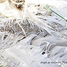 angel at ninian by NordicBlackbird