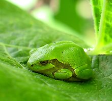 Tiny Green Tree Frog by Teresa Zieba