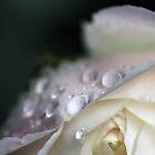 Wet wet wet by sherele