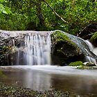 Lane Cove National Park by Mark Goodwin