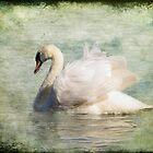 Swans by Carol Bleasdale