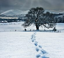 Lonely Footprints by Derek Smyth