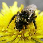 Wet bee by João Figueiredo