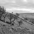 Windswept Trees near Wycoller, Lancashire by Nick Coates