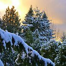 Frosty Alpenglow by Elaine Bawden