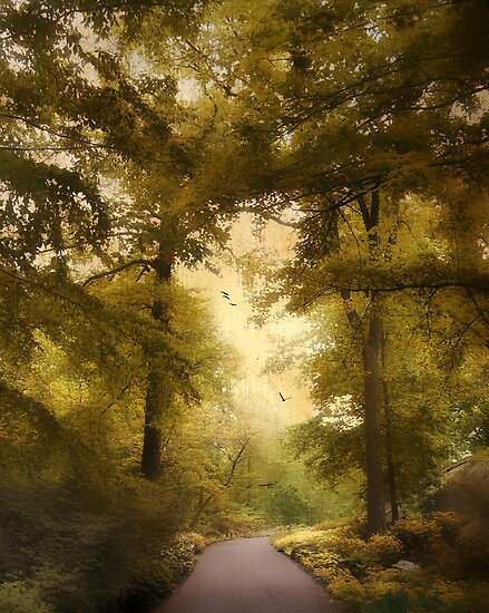Woodland Passage by Jessica Jenney