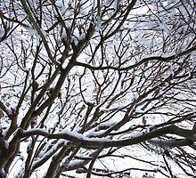 Lace Leaf Maple by Jim Stiles