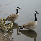 Geese with Young by RichPicks