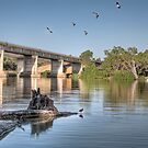 Blanchetown - Murray River by Shannon Rogers
