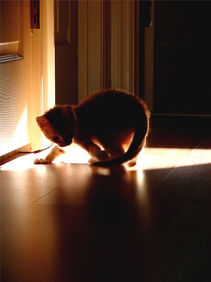 Cats Dance in Sunlight by Tracy Engle