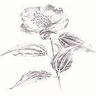 Flower by mansfi