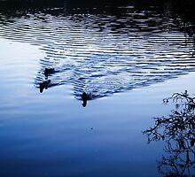 Blue Lake, Stourhead UK by Gitte Morten