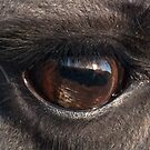 The Gentle Eye by elainejhillson