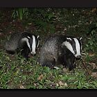 Friend not foe. Wild badgers by Rivendell7
