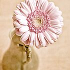 Gerbera in vintage jug by Henrietta Hassinen