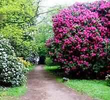 Westonbirt Arboretum by NarRakasa