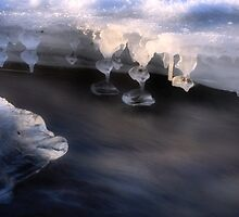 Ice Sculptures by Steve  Taylor