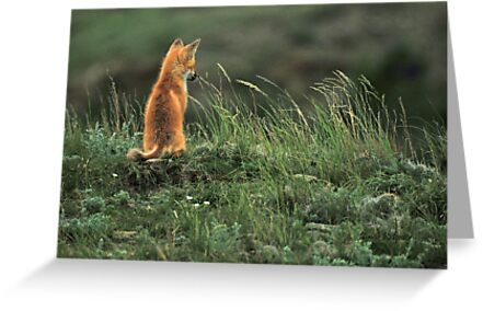 Alone but not Lonely, Fox photo by Donna Ridgway by Donna Ridgway