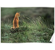 Alone but not Lonely, Fox photo by Donna Ridgway Poster