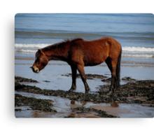 Dartmoor Pony On Remote Beach In South Devon Canvas Print