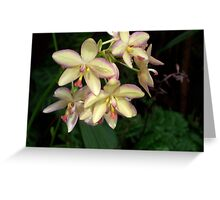 Mother of Pearl Orchids Greeting Card