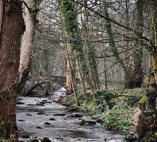 Rivelin river by Mike Higgins