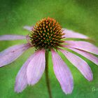 Grunge Coneflower by Anita  Pollak
