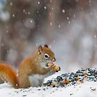 Red Squirrel by Sean McConnery
