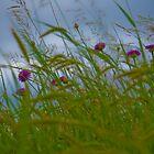 Feels Like Spring by Lisa Holmgreen